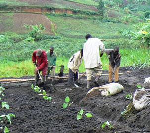 men-preparing-soil