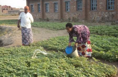 Bankanihari Waters Her Vegetables