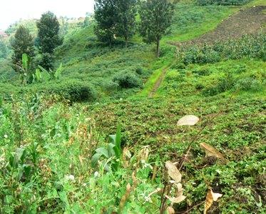 Growing Crops on Beautiful Fields