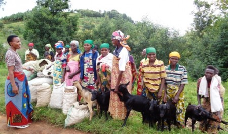 Goats for Distribution and Potatoes for Planting