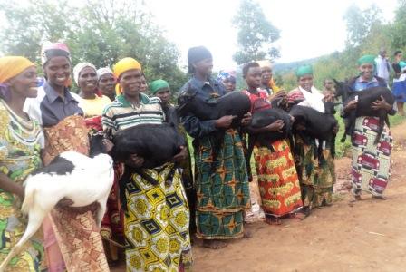 Six New Goats to Start Goat Distribution