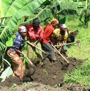 Members Preparing the Soil