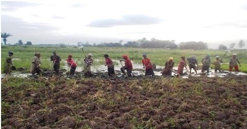 Preparing Rice Field