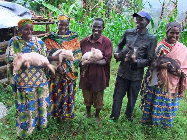 Giving Piglets to Needy Families