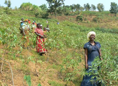 Growing Cassava in First Association's Field
