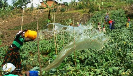 Irrigation; Watering the Vegetables