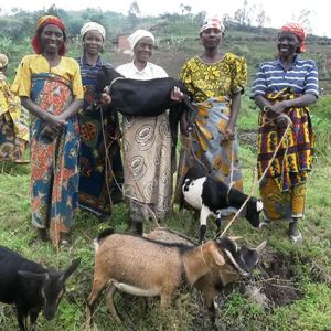 Distributing Goats to Association Members